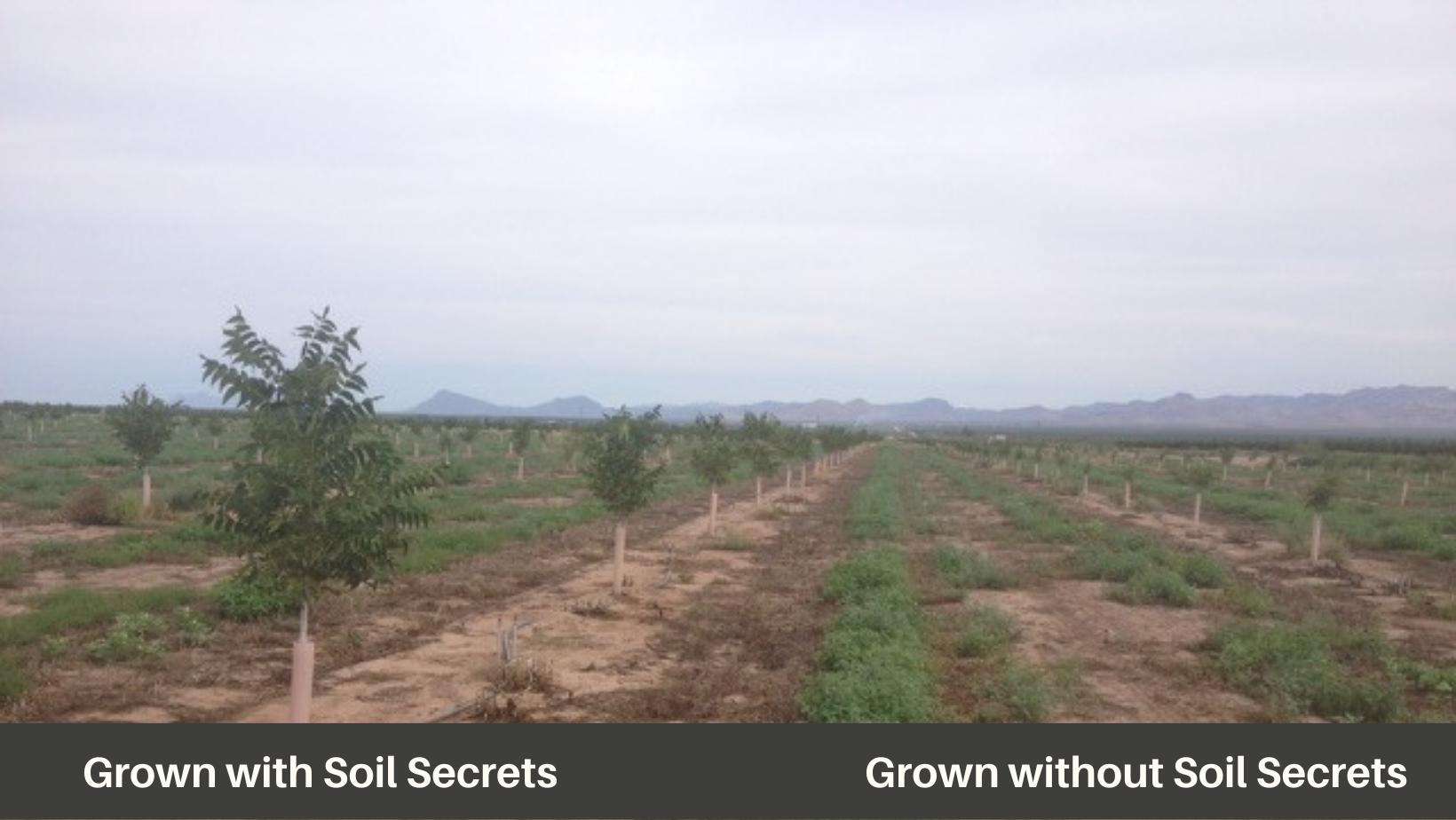Pecan leaves without Soil Secrets