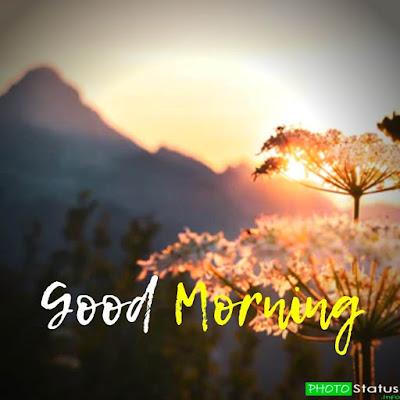 sweet good morning status