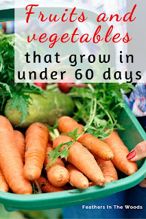List of fast growing vegetables