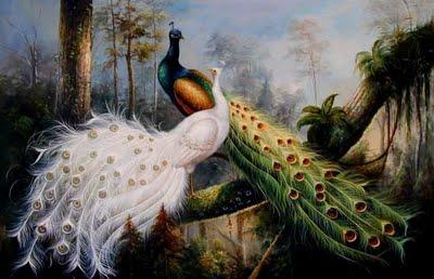 78 Gambar Burung Merak Dan Penjelasannya Gratis