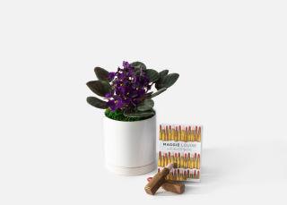 Urban Stems Violets and Chocolates