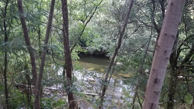Zona de árvores