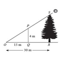 tentukan tinggi pohon