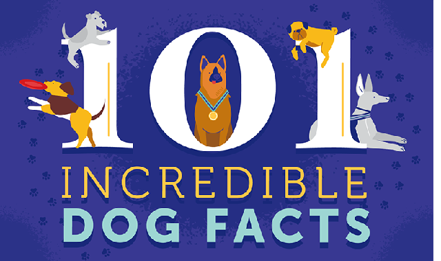 101 Incredible Dog Facts #infographic