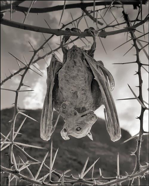 morcego-múmia-lago-natron