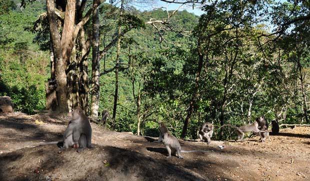 Bercengkerama di Tengah Pesona Hutan Pusuk Lombok Tengah