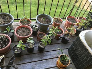 Twenty pots with plants on balcony