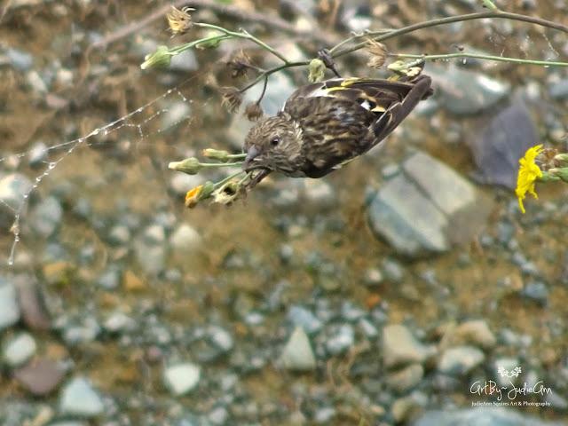 Cute bird on wildflowers