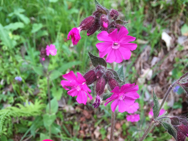 lila blühende Blumen
