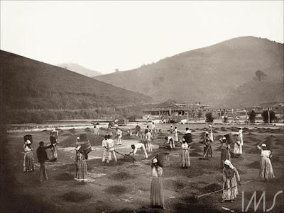 escravos fazenda