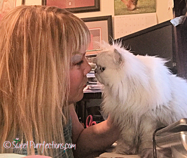 Paula and silver shaded Persian Cat, Truffle, face to face