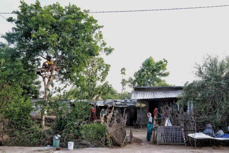 Joven con covid se aísla durante 11 días en un árbol para evitar contagiar a su familia