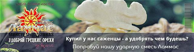 Удобрение для грецкого ореха Lammas, 0985674877, 0957351986, Walnuts Broker