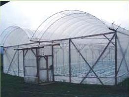 salah satu contoh rumah plastik yang bisa digunakan untuk bertanam paprika hidroponik