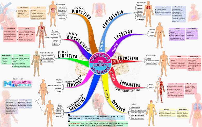 imagen de mapa mental del cuerpo humano y sus funciones, con padecimientos