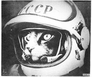 кошка-космонавт