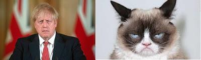 Boris and grumpy cat