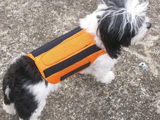 protetor de coluna para cães