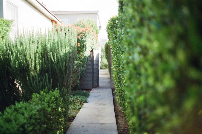 Ideas for Creating a Relaxing Garden Retreat
