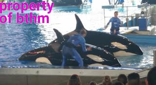 sea world orcas