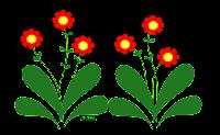 florzinha em png