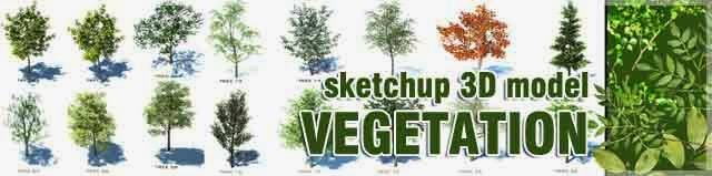 Sketchup 3d model vegetation