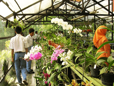 ilustrasi penjual tanaman di sekitar sekolahmu www.simplenews.me