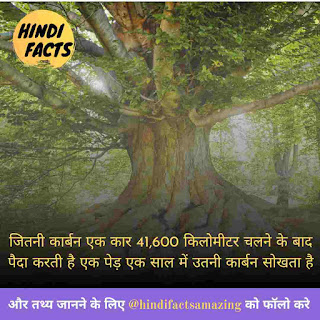tree information in hindi