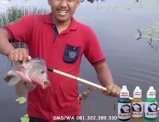 Essen Khusus Ikan Nila Babon