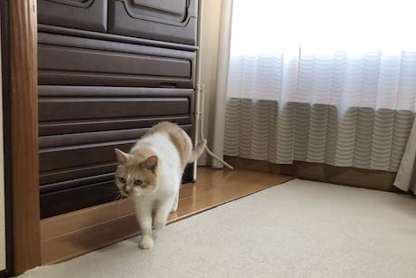 台所へ移動する猫