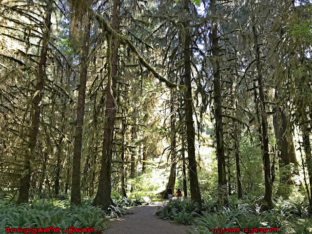 The Hall of Mosses Trail Olympic Peninsula