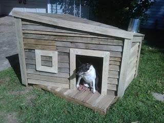 abris-chien-dog-chat-animaux-animal-extérieur-jardin-ami