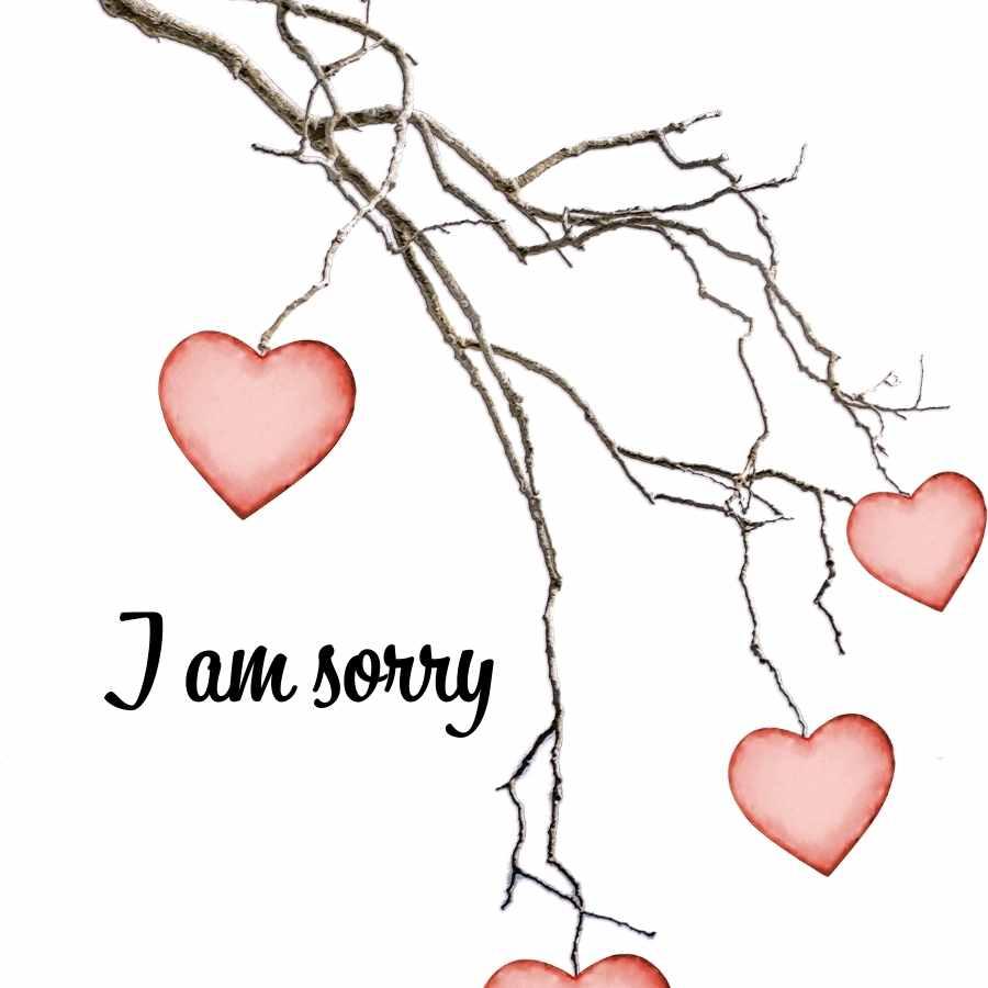 sorry sorry photo