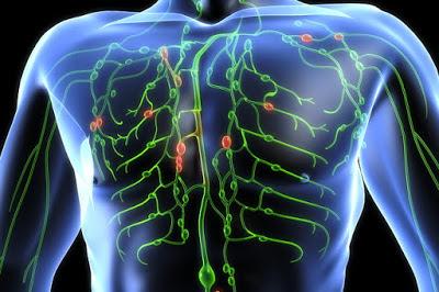 Cara Membuang Racun Dalam Tubuh (Detoks)