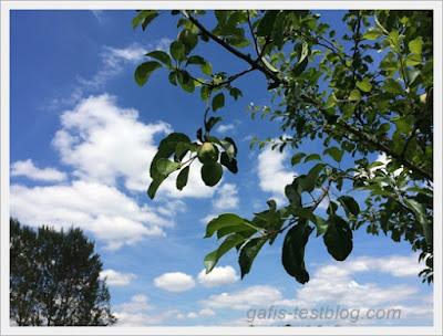 Die ersten Äpfelchen am Baum
