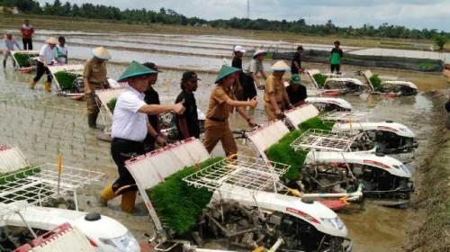 Dinas Pertanian OKI  KembangkanPenangkaran Benih Padi