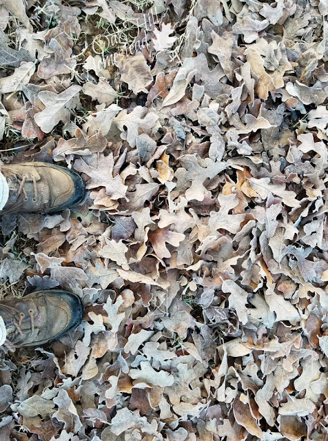 Fallen leaves are a perfect addition to the compost pile.