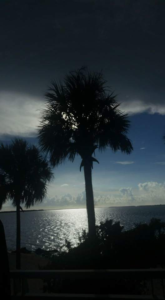 Sanibel Island palm trees before the hurricane