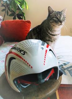 猫とヘルメット