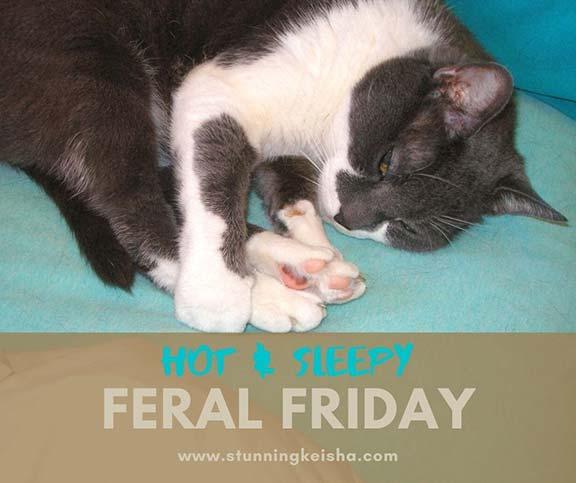 Feral Friday: Hot & Sleepy Edition