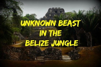 Unknown Beast in the Belize Jungle
