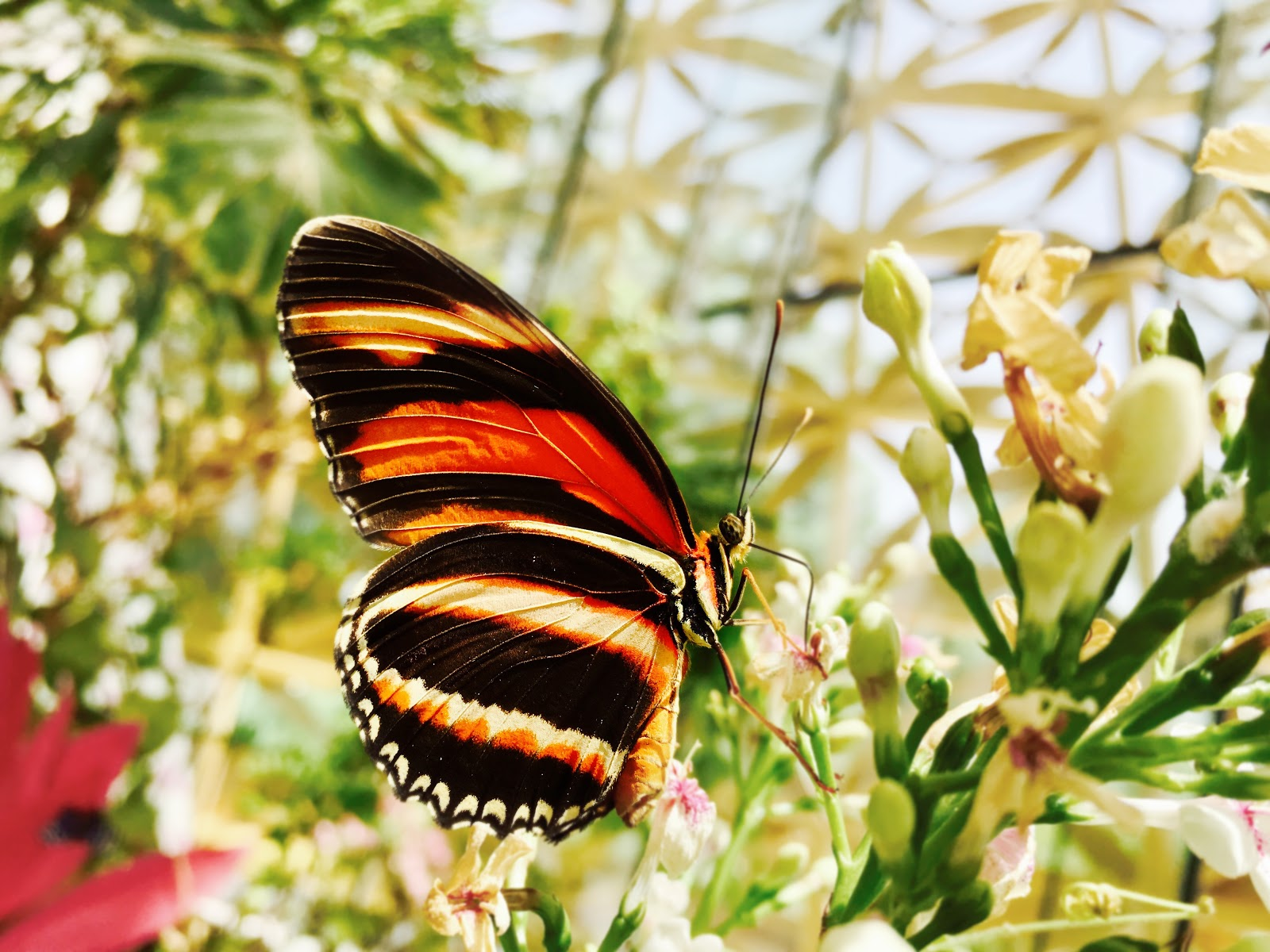 selective-focus-photograph-of-black-and-yellow-butterfly-images