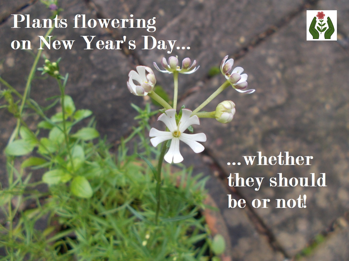 The Green Fingered Blog Plants Flowering In Winter Thanks To The