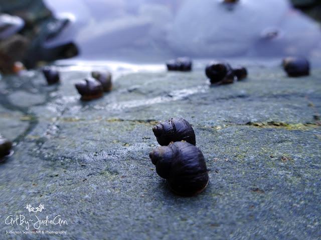 Tiny Sea Snails