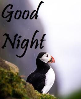 good night image of bird
