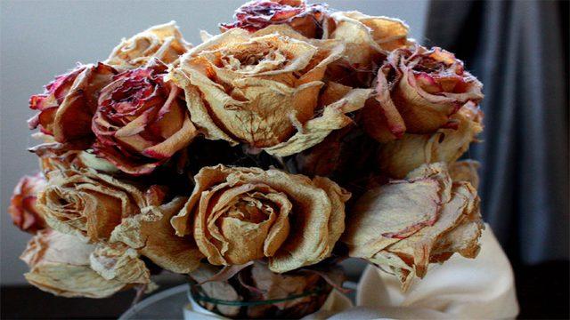अपने घर में कभी भूलकर भी ना रखें सूखे हुए फूल, वरना हो जायेंगे बर्बाद - Fir  Post