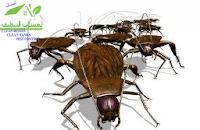 شركة مكافحة حشرات , رش مبيدات بمكة المكرمة