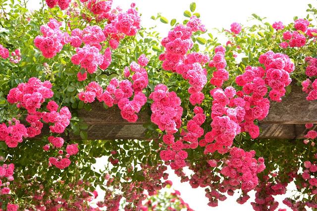 Mitsuke English Garden