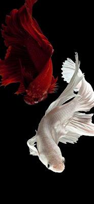 خلفيات بحر و أسماك للهواتف الذكية Fish Phone Wallpapers خلفيات سمك و بحر للهاتف الذكي صور و خلفيات لشاشة الهاتف الذكي