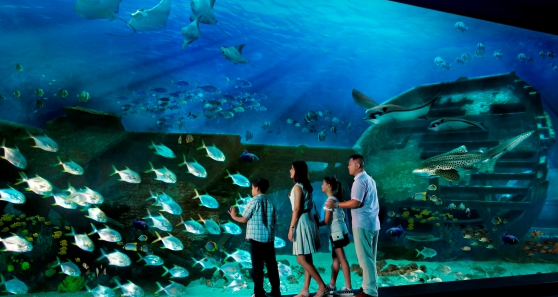Harga Tiket Sea Aquarium Singapore Terbaru 2019